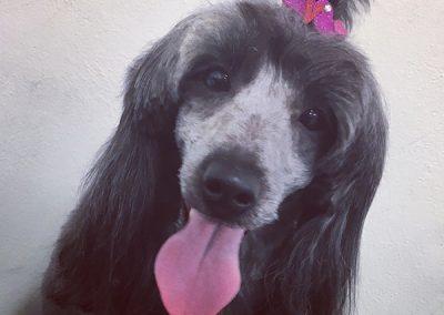 Dog Groomer Bristol Sams Woof Wash