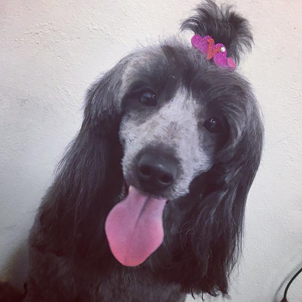Dog Groomer in Bristol Sams Woof Wash