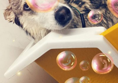Dog in bubbles