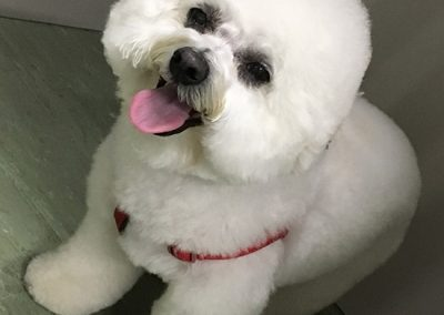 New dog haircut